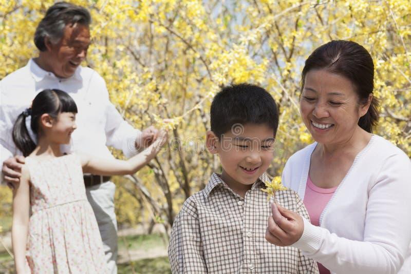 Los abuelos y los nietos felices, sonrientes en el parque en la primavera que mira la flor florecen fotografía de archivo