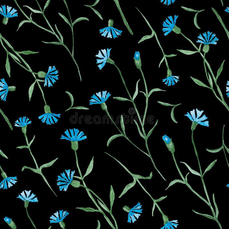 Los acianos plantan con las flores azules, pintura de la acuarela - modelo inconsútil en negro stock de ilustración