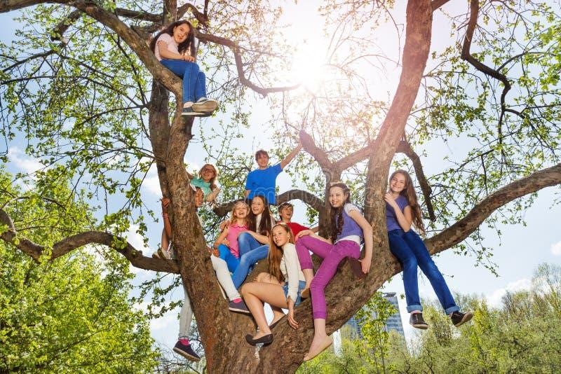 Los adolescentes se sientan en árbol durante día de verano hermoso foto de archivo libre de regalías