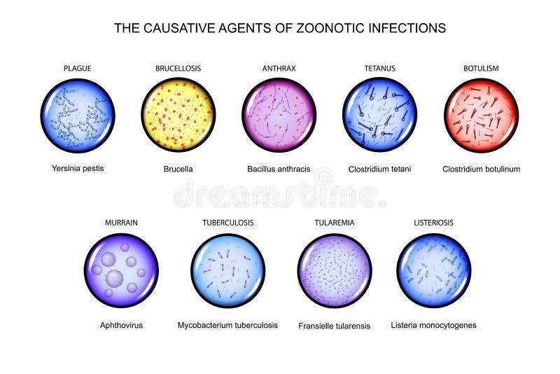 Los agentes causativos de infecciones zoonóticas stock de ilustración
