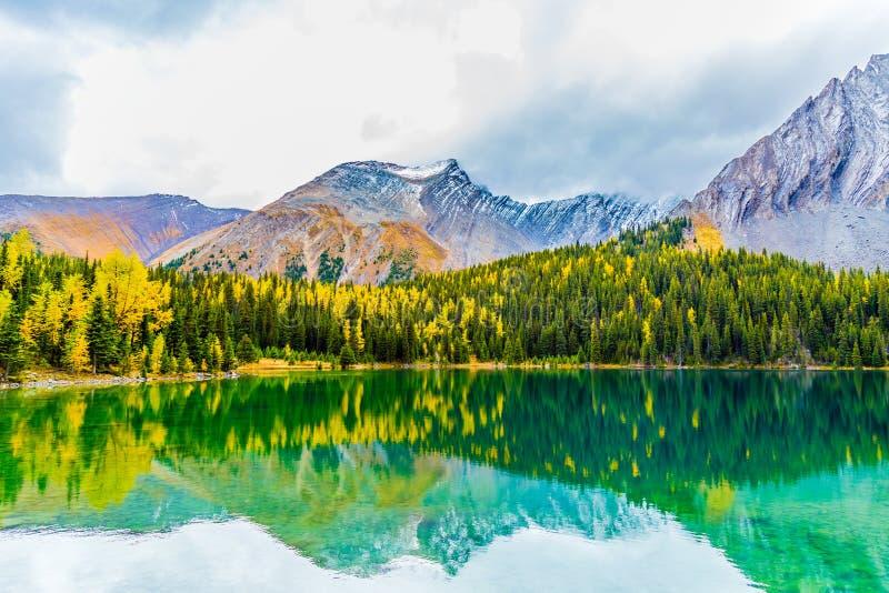 Los alerces del otoño de Chester Lake foto de archivo