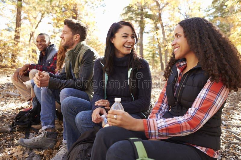 Los amigos se sientan en un árbol caido en el bosque, el hablar de dos mujeres imágenes de archivo libres de regalías