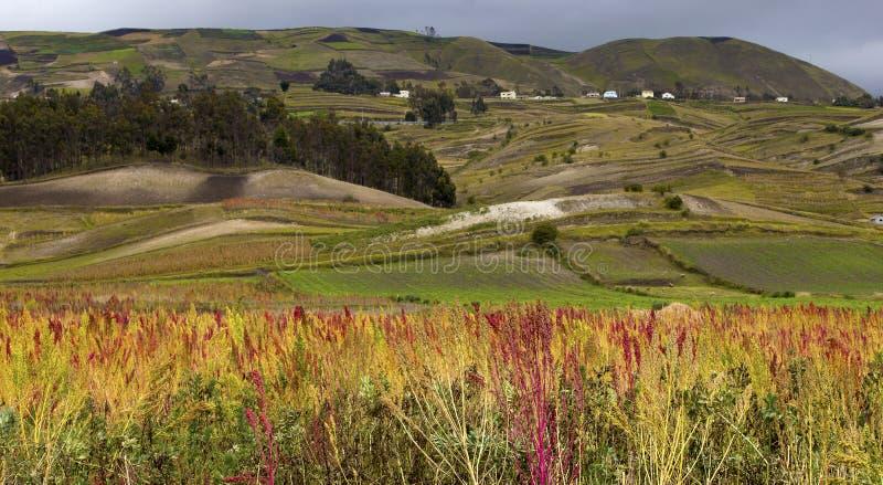 Los Andes en Ecuador fotos de archivo libres de regalías