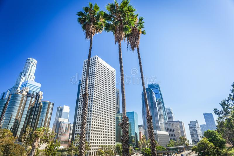 Los Angeles, California, USA downtown cityscape. Beautiful three tall palms in the center stock images
