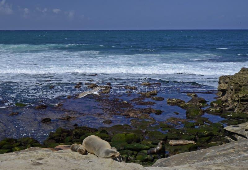 Los Angeles Jolla - klejnot San Diego obrazy royalty free