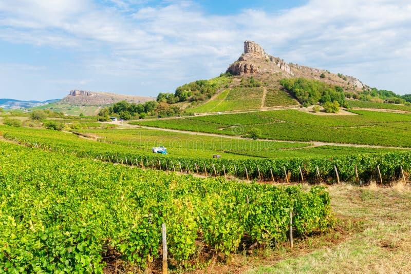 Los Angeles Roche De Solutré z winnicami, Burgundy, Francja zdjęcie stock