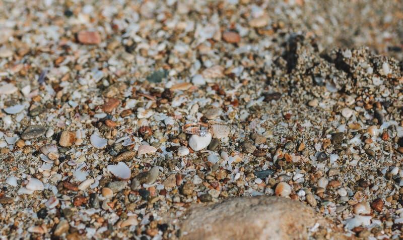 Los anillos de bodas mienten en la arena en la playa cerca del agua fotos de archivo libres de regalías