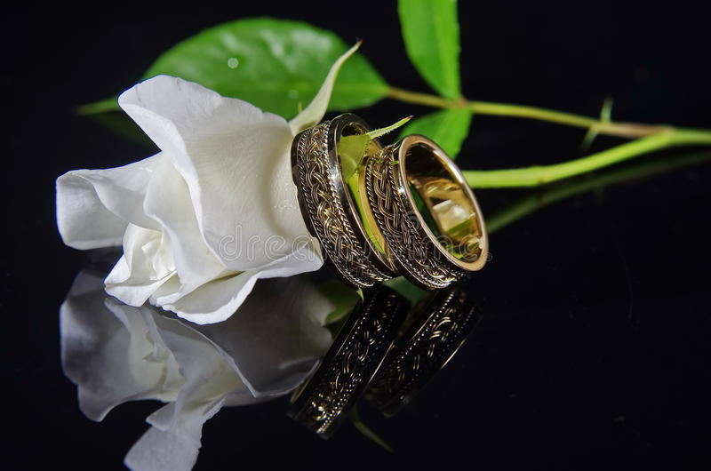 Los anillos de bodas y el blanco se levantaron imagen de archivo