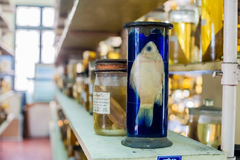 Los animales marinos preservaron el alcohol en los tubos de cristal fotografía de archivo libre de regalías