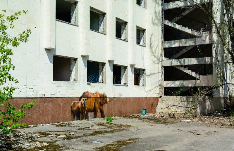 Los animales salvajes pintaron en las paredes de casas abandonadas en la ciudad de Pripyat Central nuclear de Chernobyl foto de archivo