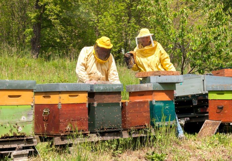 Los apicultores están trabajando con las abejas y las colmenas en el colmenar imagenes de archivo