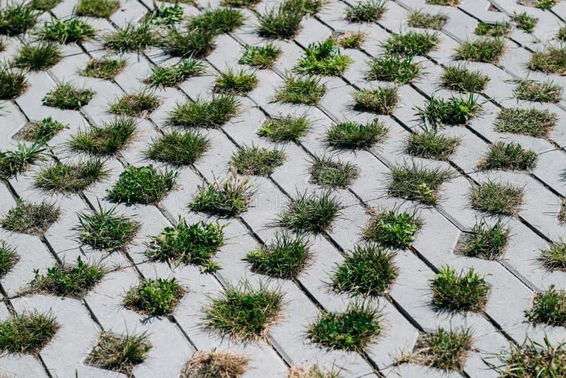 Los arbustos de la hierba crecen de debajo las losas del cemento Trayectoria de piedra del jard?n Imagen blanco y negro Fondo int imagen de archivo libre de regalías
