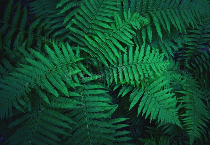 Los arbustos del helecho crecen en el bosque imágenes de archivo libres de regalías