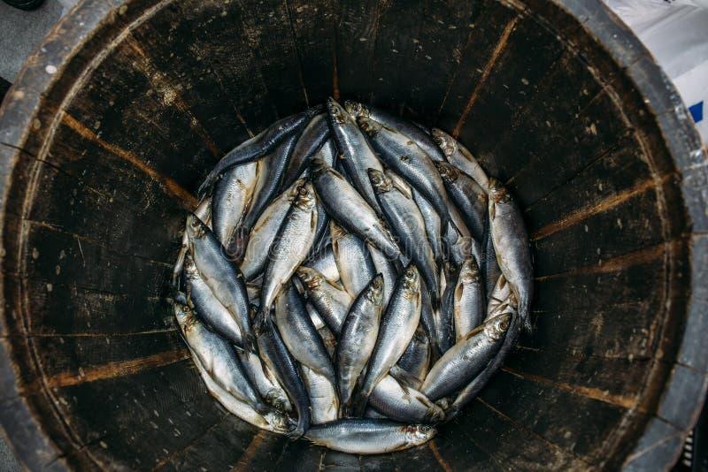 Los arenques frescos salados pescan en el barril de madera del roble, opinión superior de los mariscos sanos tradicionales fotos de archivo