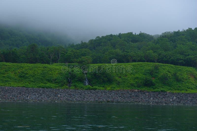 Los argumentos verdes del bosque con una pequeña agua caen en la península de Shiretoko, considerada del mar de Ojotsk imagen de archivo libre de regalías
