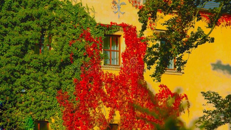 Los balcones de la vivienda hermosa vieja se cubren en las flores rojas - imagen imagenes de archivo