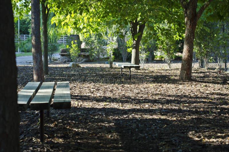 Los bancos de parque debajo de los árboles del parque imagen de archivo libre de regalías