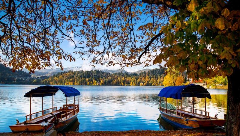 Los barcos de madera tradicionales en el lago sangraron, Eslovenia imagen de archivo libre de regalías
