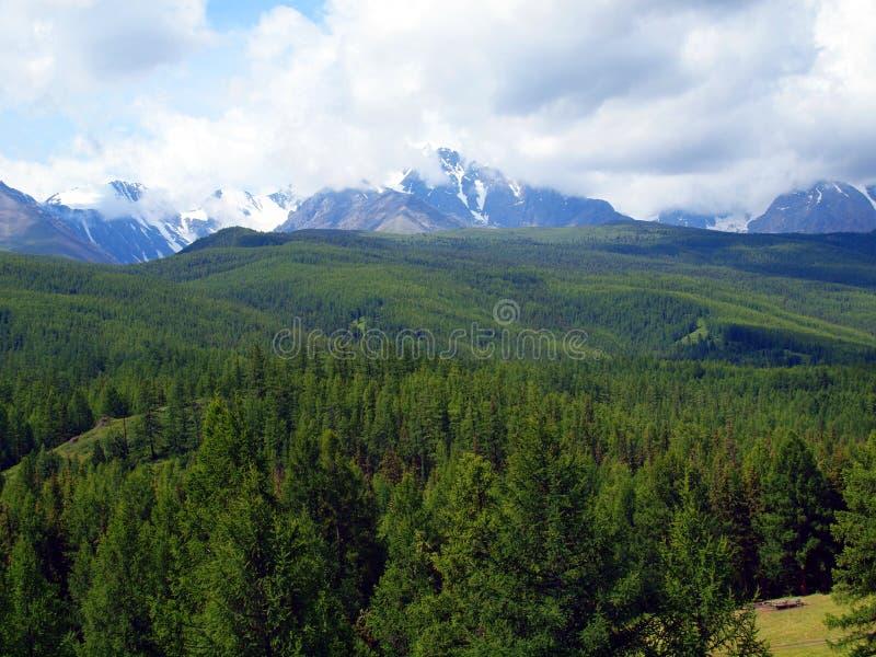 Los bosques de Altay, montaña Altai imagen de archivo