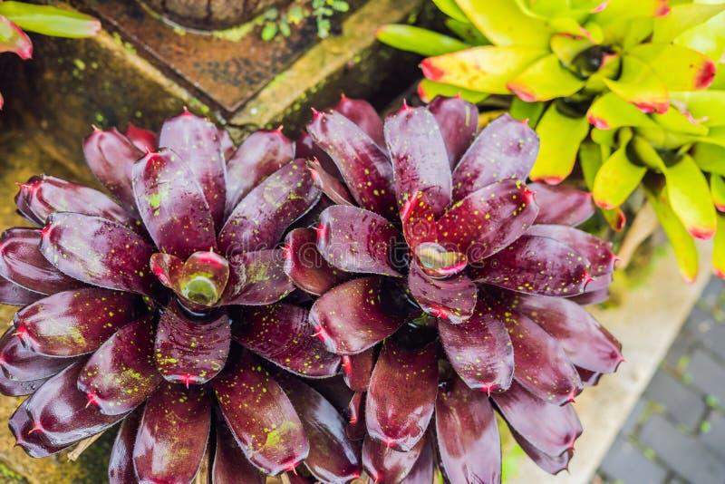 Los bosques mojados exóticos de las plantas tropicales son mojados después de lluvia fotos de archivo libres de regalías