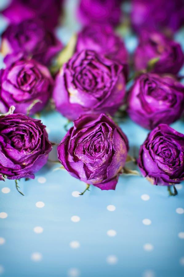 Los brotes secos del las rosas rojas florecen en fondo azul claro borroso imagen de archivo