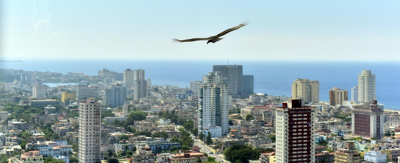 Los buitres americanos (Cathartidae Lafresnaye) se elevan sobre Havana Cuba imagenes de archivo
