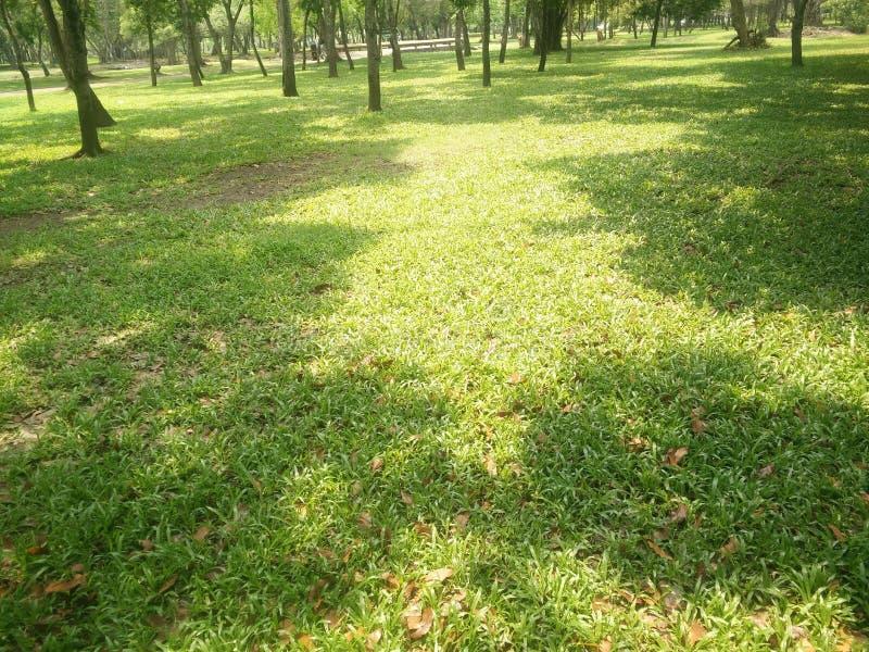 Los céspedes verdes caen fotografía de archivo
