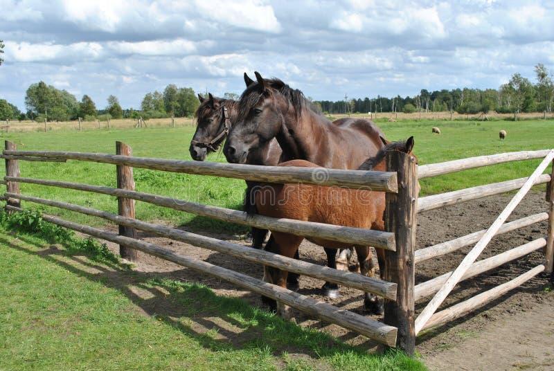 Los caballos imagenes de archivo