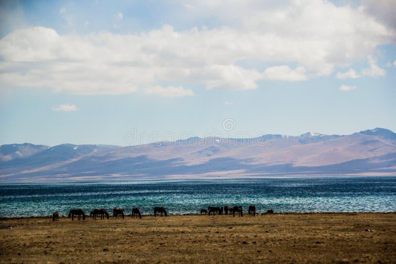 Los caballos están pastando a lo largo del lago Kol de la canción fotos de archivo