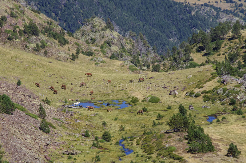 Los caballos pastan en prado en valle de la montaña en los Pirineos cerca de coma foto de archivo