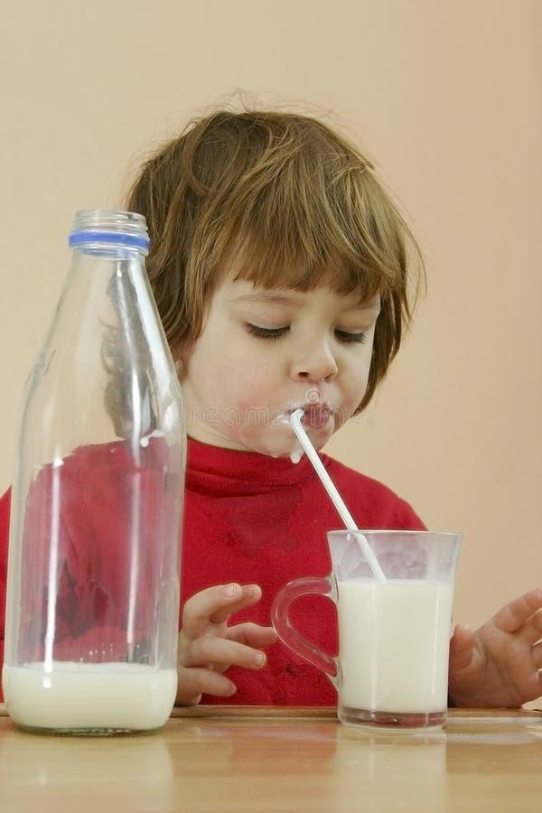 Los cabritos deben beber la leche foto de archivo libre de regalías