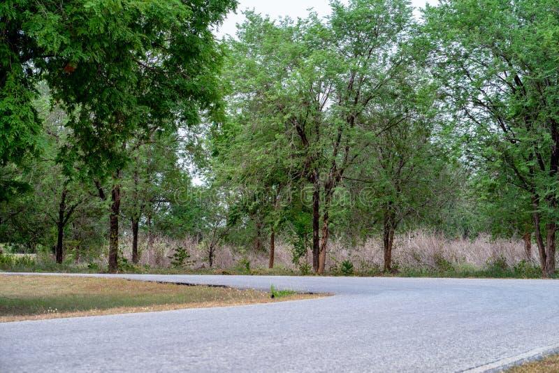 Los caminos rurales tienen árboles en ambos lados imagen de archivo libre de regalías