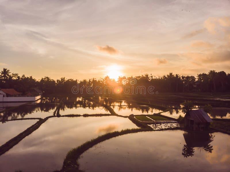 Los campos del arroz se inundan con agua Arroces de arroz inundados M?todos agron?micos de producir el arroz en los campos floodi imagen de archivo libre de regalías