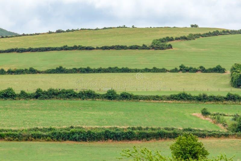 Los campos verdes de Moneygall, condado Offaly, Irlanda foto de archivo libre de regalías