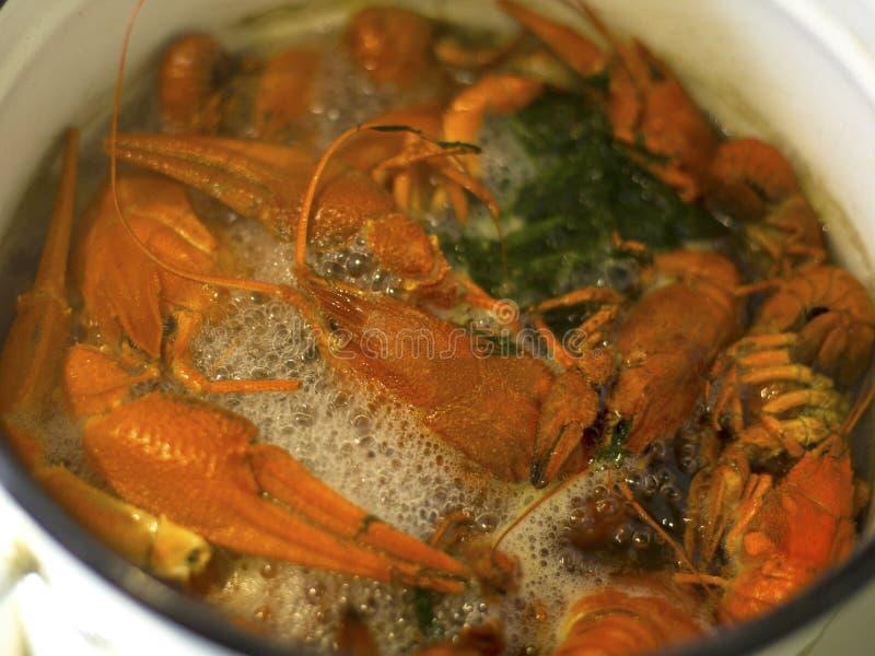 Los cangrejos de ebullición en el adobo, cocinando la delicadeza del río hirvieron los cangrejos en una cacerola un primer delici imágenes de archivo libres de regalías
