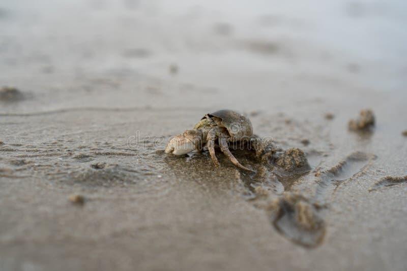 Los cangrejos de ermitaño viven en la arena en el mar, él arena de excavación para enterrarse para ocultar de depredadores foto de archivo libre de regalías