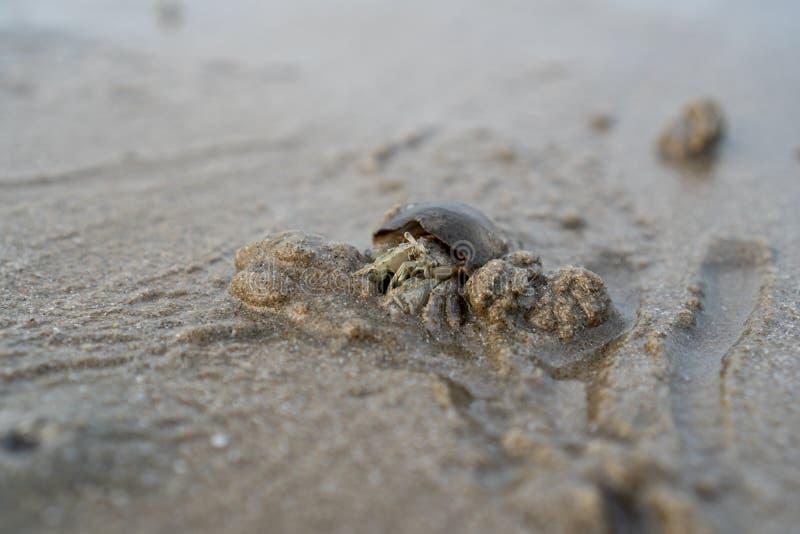 Los cangrejos de ermita?o viven en la arena en el mar, ?l arena de excavaci?n para enterrarse para ocultar de depredadores imagen de archivo libre de regalías