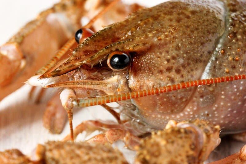 Los cangrejos se cierran para arriba imagenes de archivo