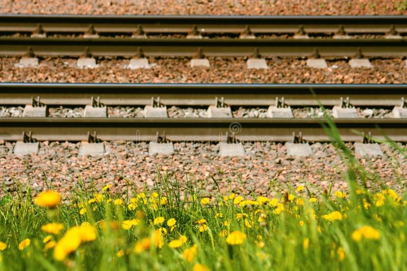 Los carriles y los durmientes ferroviarios mienten en la tierra contra la perspectiva de los dientes de león florecientes amarill foto de archivo