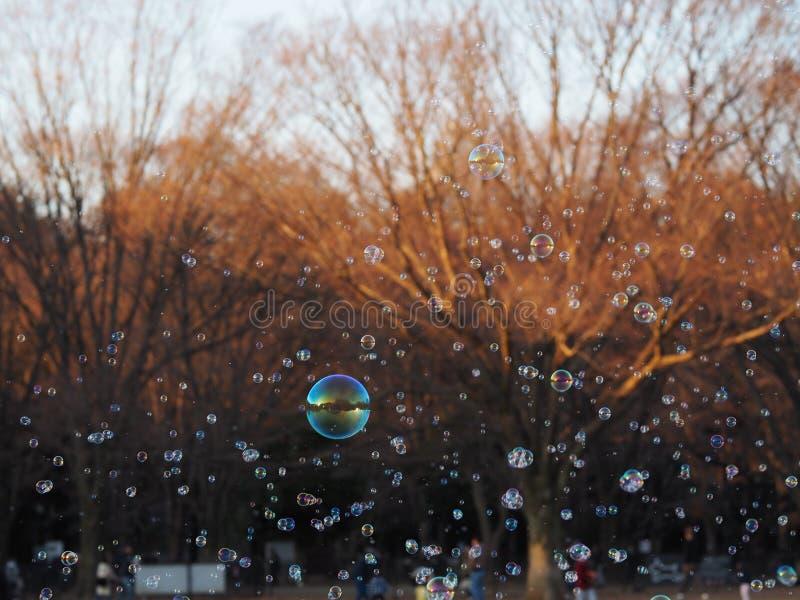 Los centenares de burbujas cogieron en la luz del sol del parque apenas alrededor para estallar fotografía de archivo libre de regalías