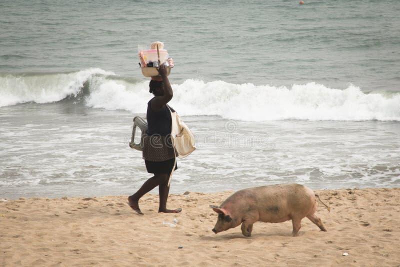 Los cerdos y los pescadores en cabo costean, Ghana imagen de archivo