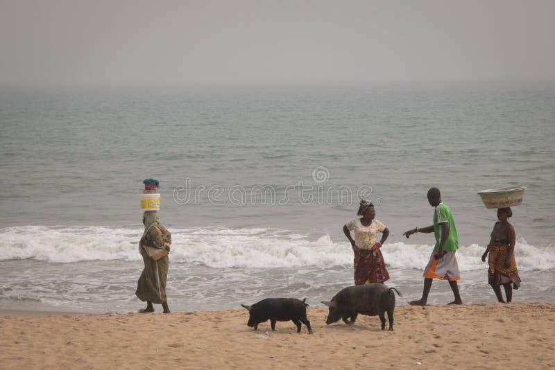 Los cerdos y los pescadores en cabo costean, Ghana fotografía de archivo