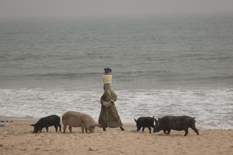 Los cerdos y los pescadores en cabo costean, Ghana imagen de archivo libre de regalías