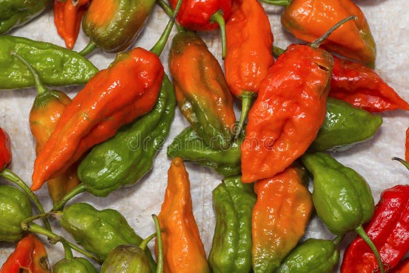 Los chiles del Naga, es una de las pimientas de chiles sabidas más calientes Pueblo de Satakha fotografía de archivo