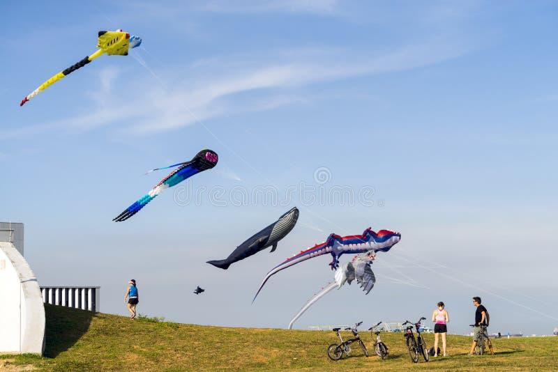 Los ciclistas admiran cometas coloreadas multi del vuelo grande en el parque de la costa este fotos de archivo
