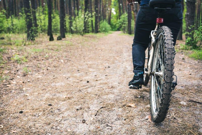 Los ciclistas montan en un camino de la grava en bosque del pino foto de archivo