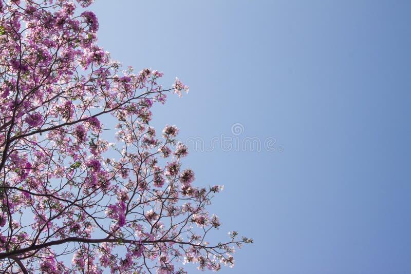 Los cielos nunca han sido más azules imagen de archivo libre de regalías