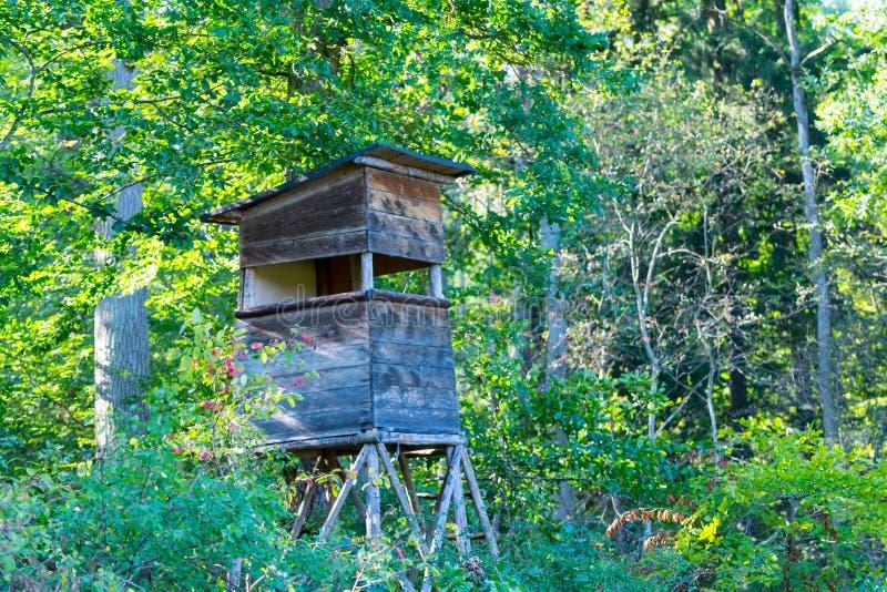 Los ciervos se colocan en la reserva natural Schoenbuch más forrest de Alemania imágenes de archivo libres de regalías