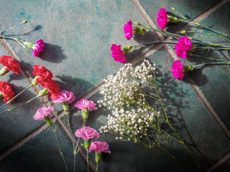 Download Los Claveles Coloridos Con El Espacio De La Copia En El Granito Emergen Foto de archivo - Imagen de clavel, verde: 100529064