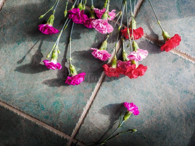 Download Los Claveles Coloridos Con El Espacio De La Copia En El Granito Emergen Imagen de archivo - Imagen de belleza, floración: 100529701
